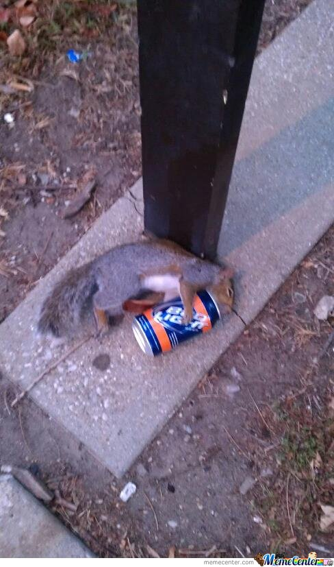 Squirrel's know how to party