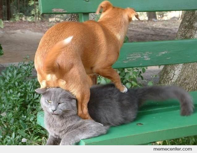 That's why cat hates dog