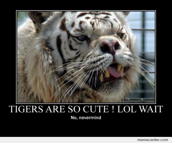 Tigers are cute