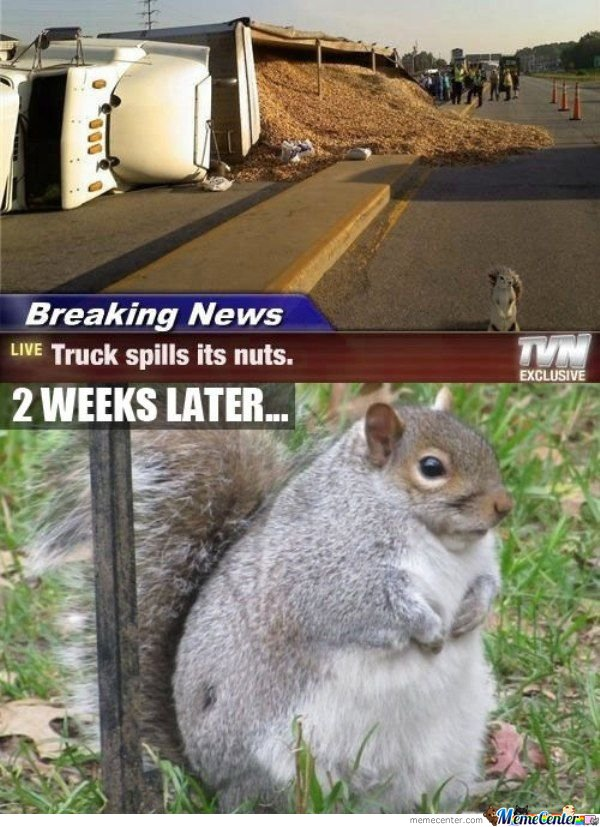 Truck Spills Its Nuts - 2 Weeks Later
