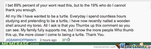 Turtle to my dreams