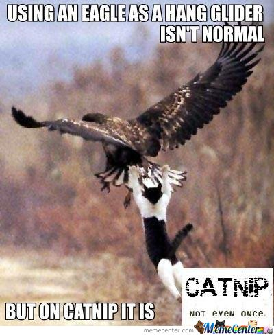 Using an eagle as a hang gilder isn't normal. but on catnip it is.