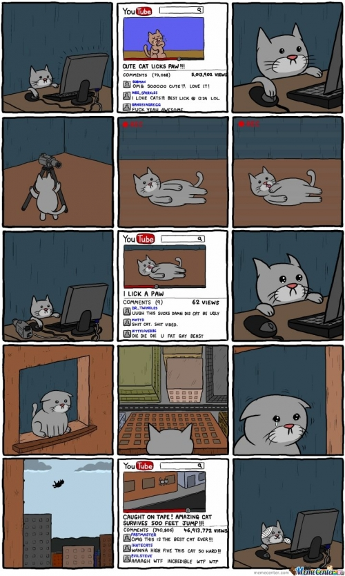 You Tube cat
