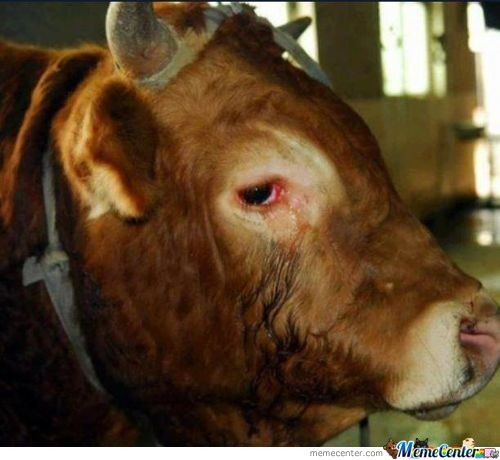 A Bull In Hong Kong Was Reported To Cry And Beg For His Life! (Read My Comment To See The Rest)