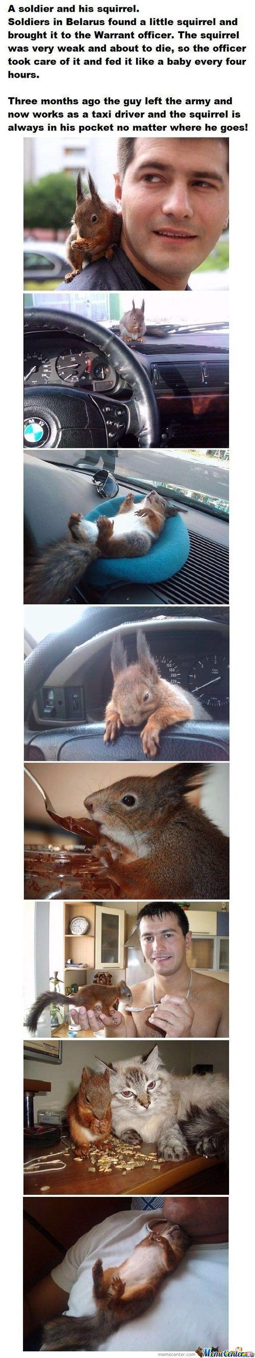 A Combine Of Hot Soldier And Cute Squirrel