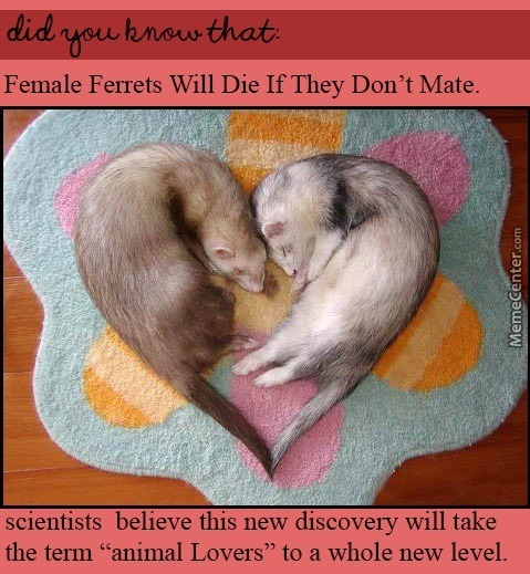 A Ferret Is Fine Too
