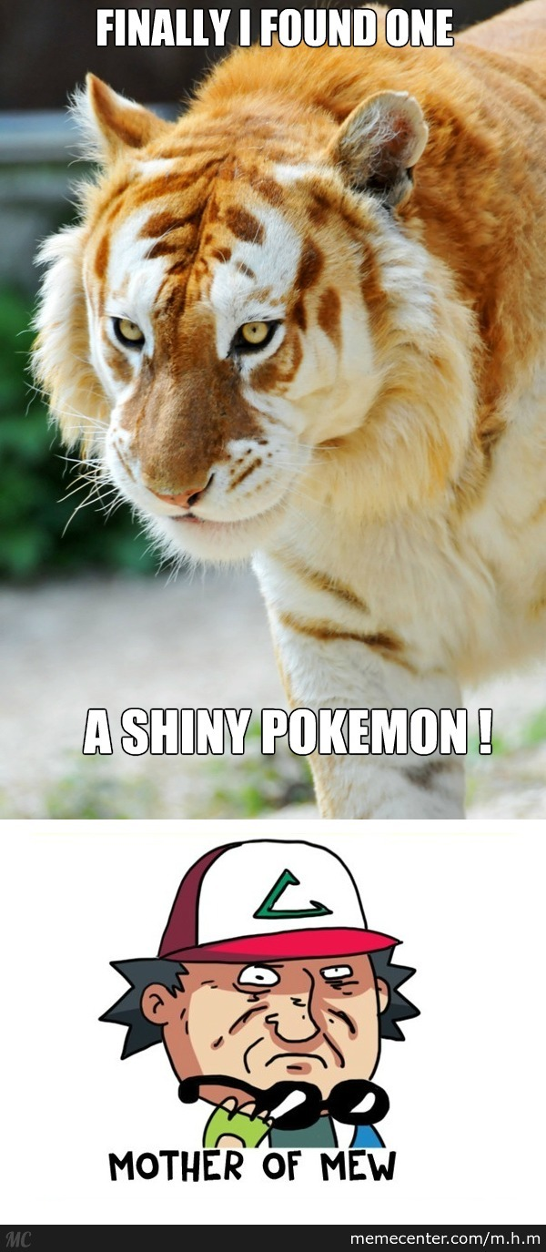 a golden tiger_o_2700947 tiger memes best collection of funny tiger pictures