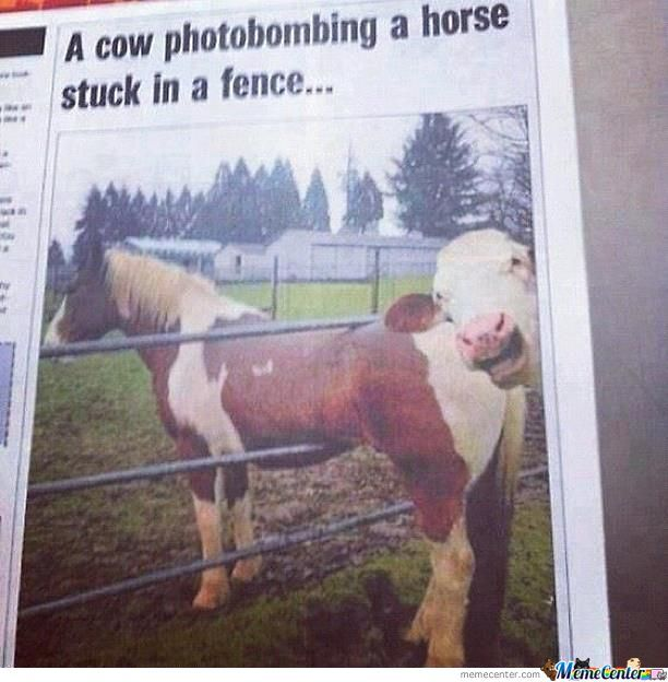 A Horse Is Stuck In The Fence, Wait.. Whut?