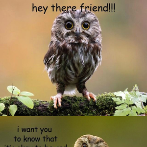 A Message From The Owls By Bdv008 Meme Center