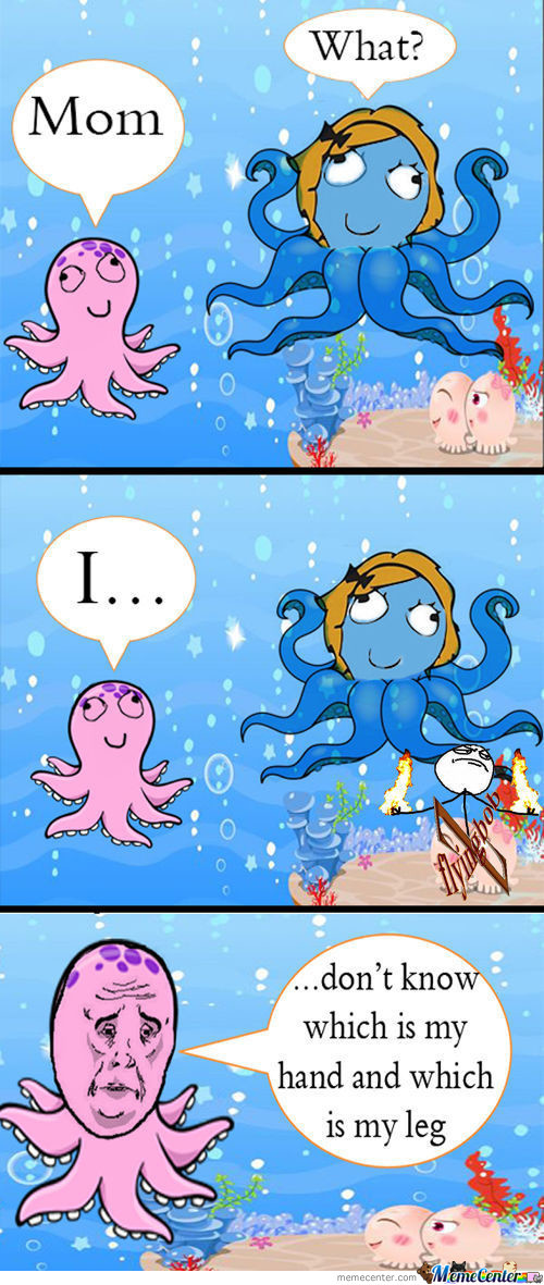 A Moment In The Life Of An Octopus