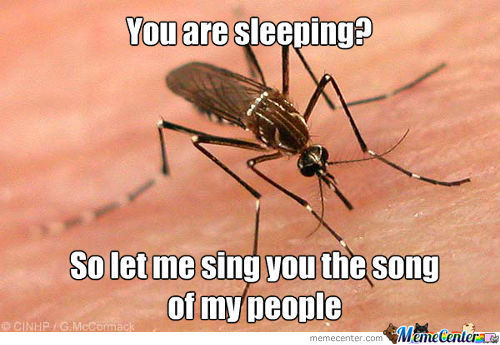 A Mosquito That Wants To Sing