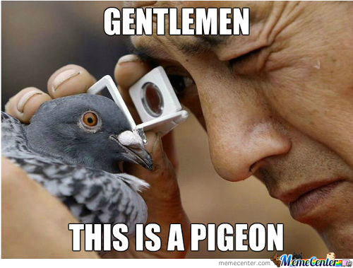A Real Pigeon