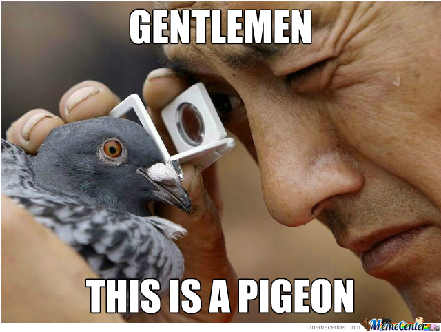 a real pigeon_o_340417 a real pigeon by nightbreed meme center