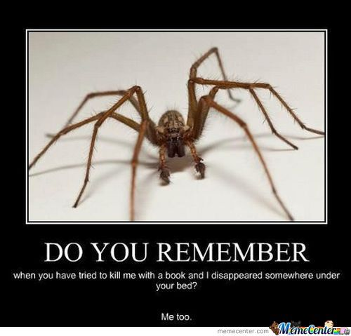 A Spider Always Remembers