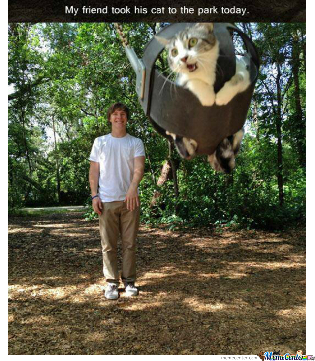 Tan Picture of swinging a cat