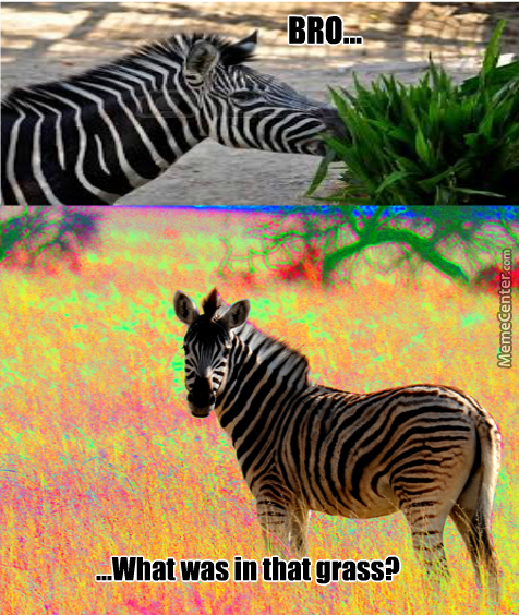 """A Zebra's Diet Consists Of """"grass"""" Ad """"leaves"""""""