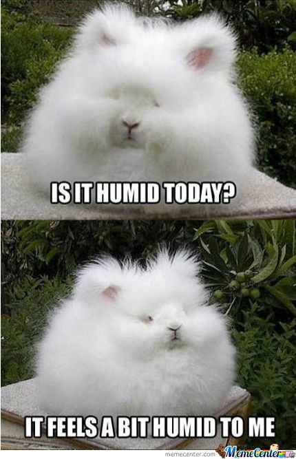 Aah Yes, It's Humid.