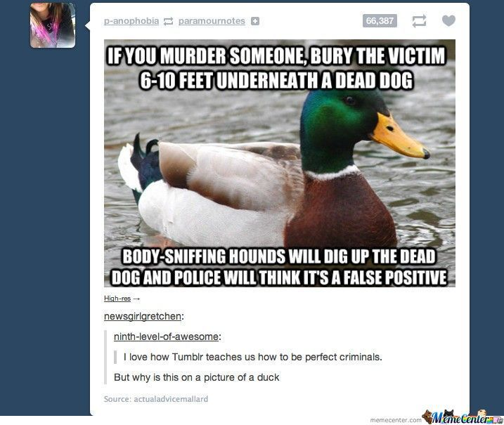 Dating advice from actual Advice Mallard