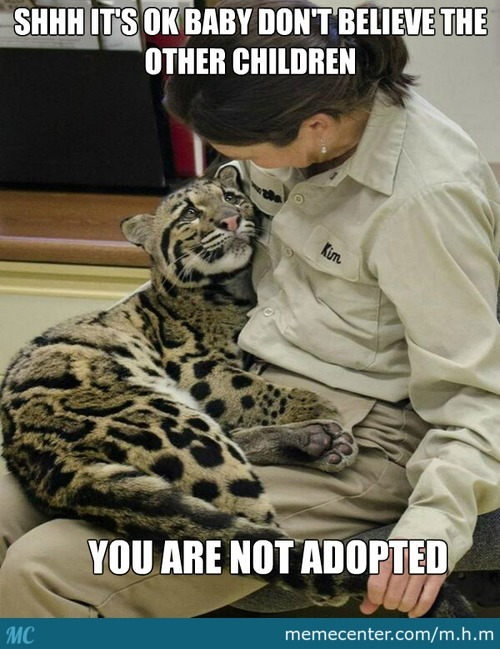 Adopted Clouded Leopard Cub