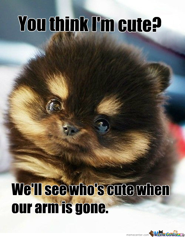 aggressively cute puppy_o_307229 aggressively cute puppy by recyclebin meme center