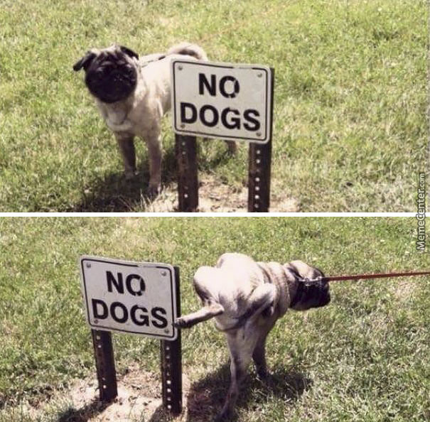 Ain't No Land Restricted For A Dog Dat Got To Pee