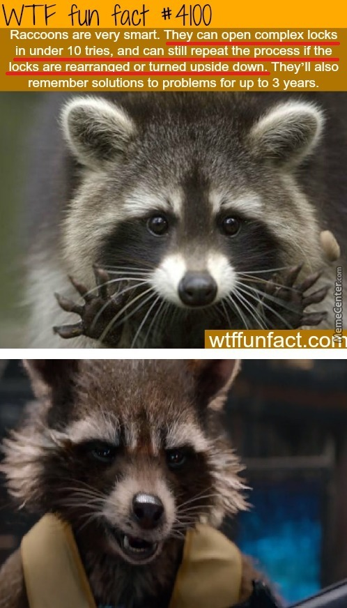 ain amp 039 t no thing like me except me_o_5573919 rocket raccoon memes best collection of funny rocket raccoon pictures