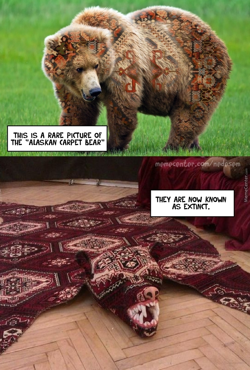Alaskan Carpet Bear