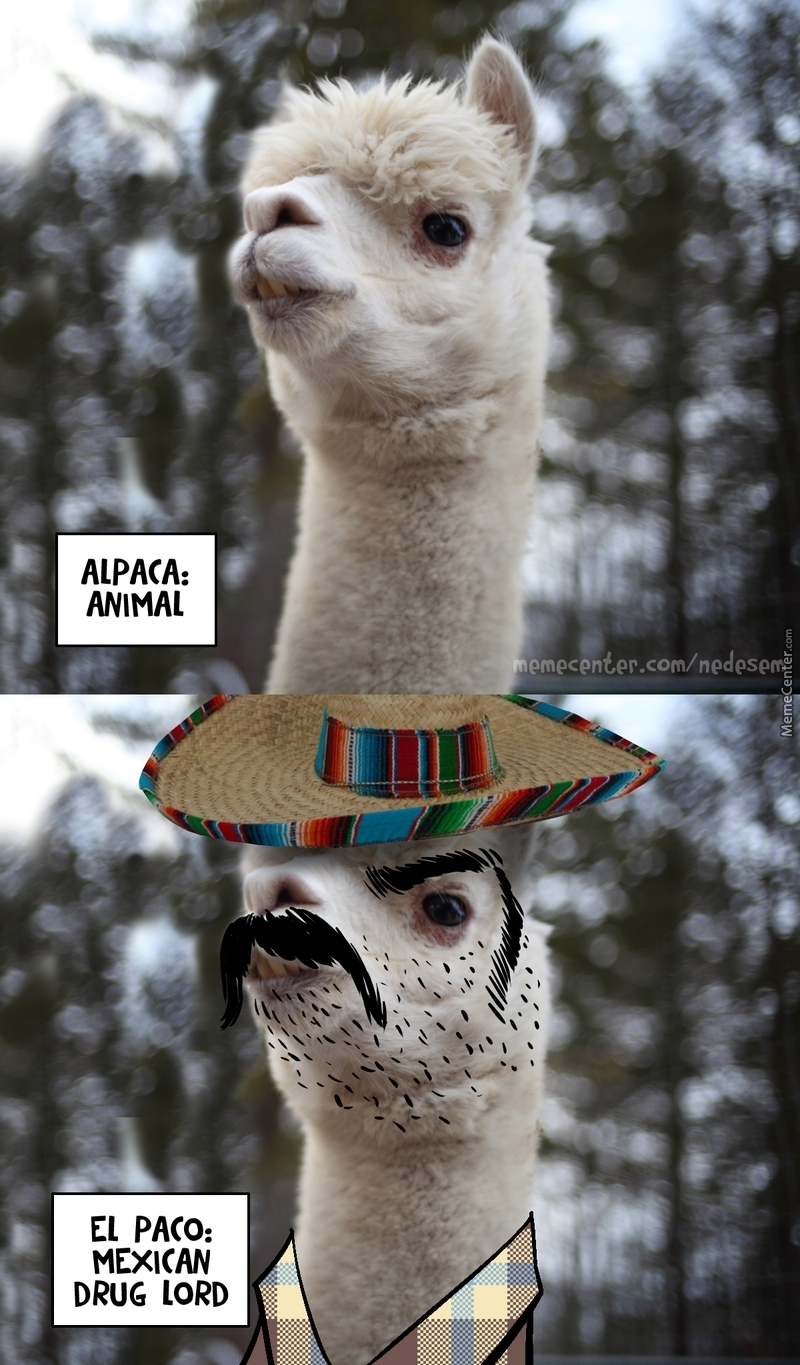Alpaca El Paco By Nedesem Meme Center