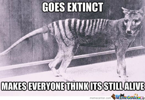 Am I The Only One Who Knows About The Thylacine?