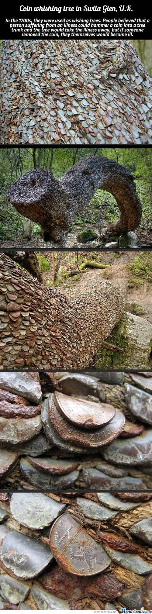 Amazing Coin Tree