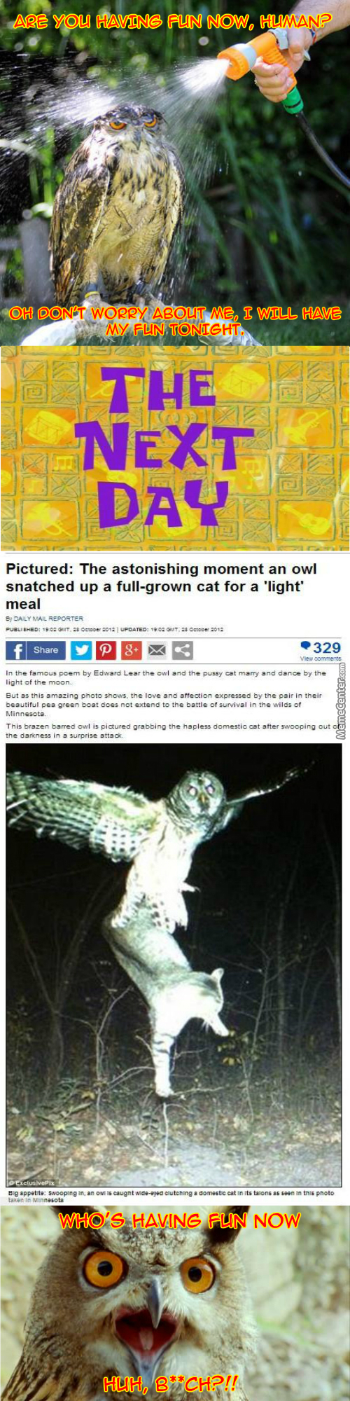 An Owl Should Never Be Pissed Or Your Cat Will Be Missed