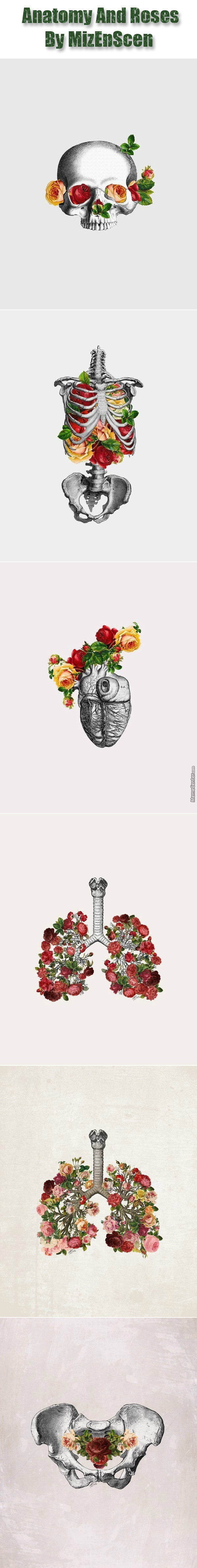 Anatomy And Roses