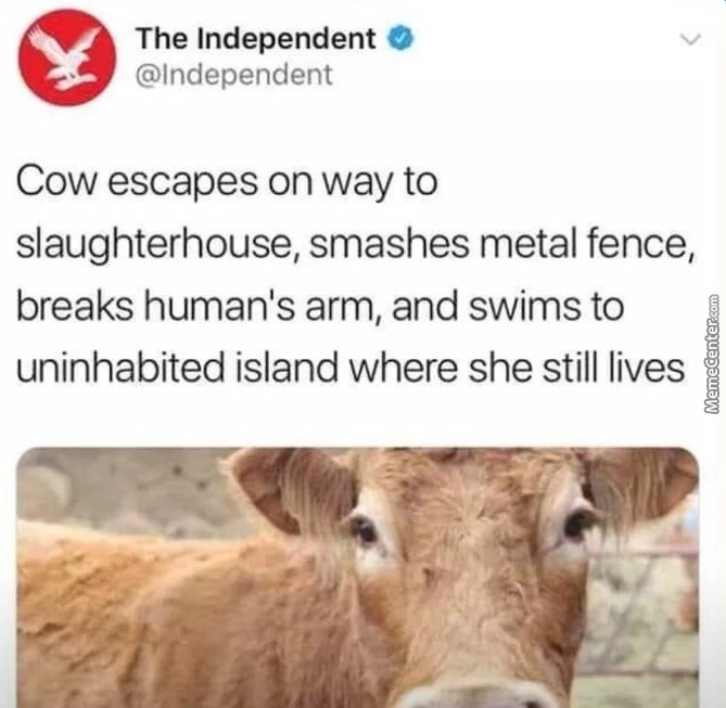 And If The Cow Didnt Die... Well..