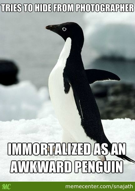 And That Kids, Is How Socially Awkward Penguin Was Born