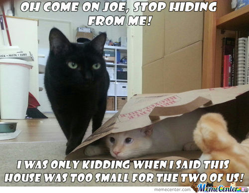 And The Next Day, Joe Went Missing!