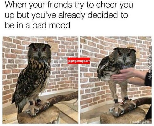 Angery Owl