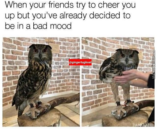 Funny Memes To Cheer Up A Friend : Angery memes. best collection of funny angery pictures