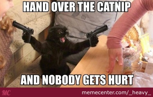 Angry Pussy Wants Some Catnip