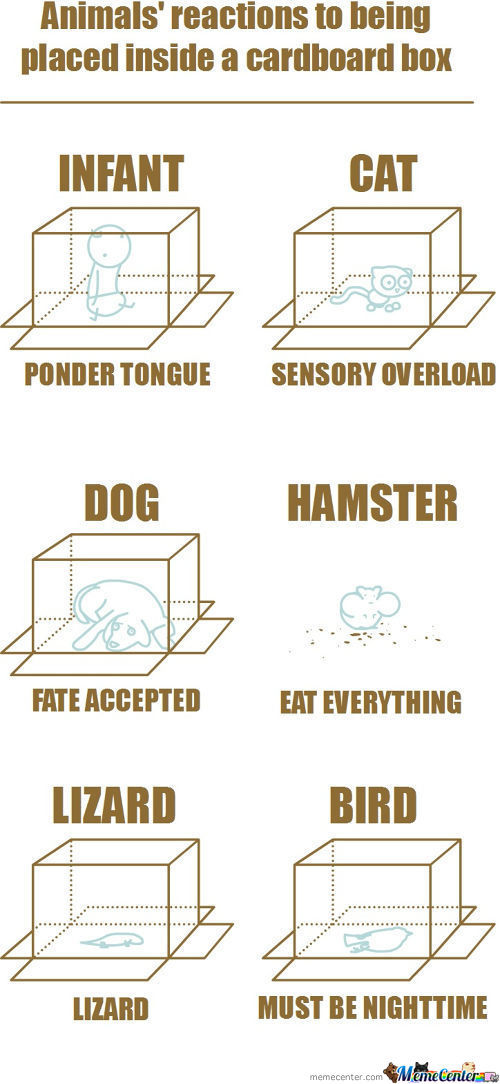 Animal's Reactions To Being Placed Inside A Cardboard Box