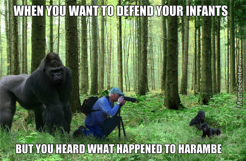 Another Harambe Meme!? God D*mnit Op!