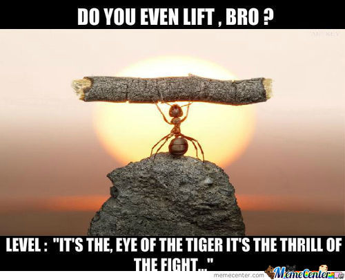 Ant Can Lift