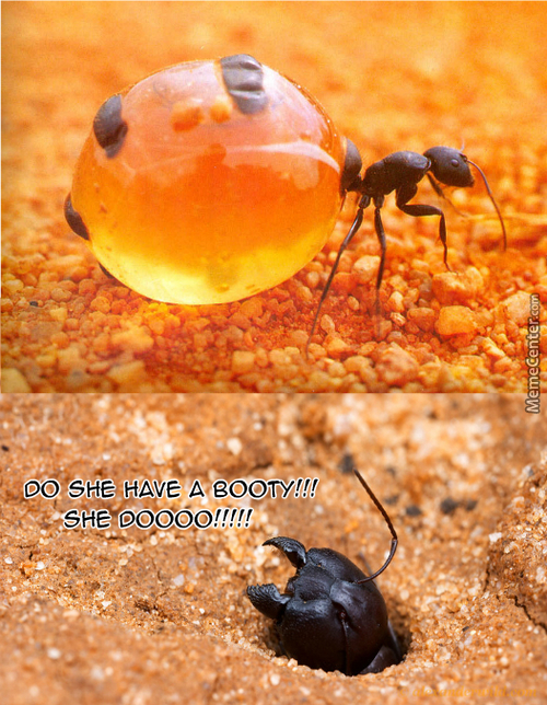 Ants Like Teh Booty Also
