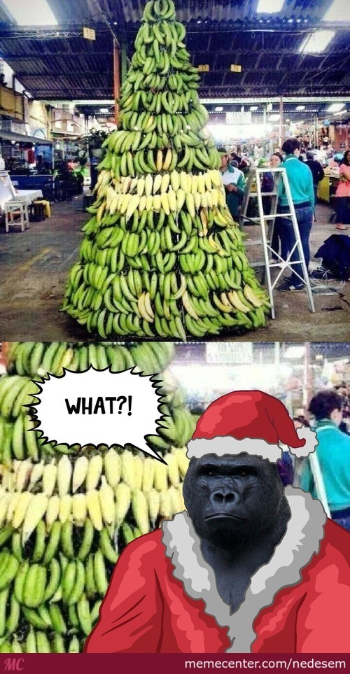 Ape Santa Approves