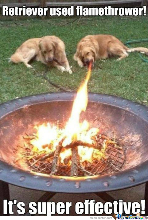 Apparently Retrievers Are Fire Type