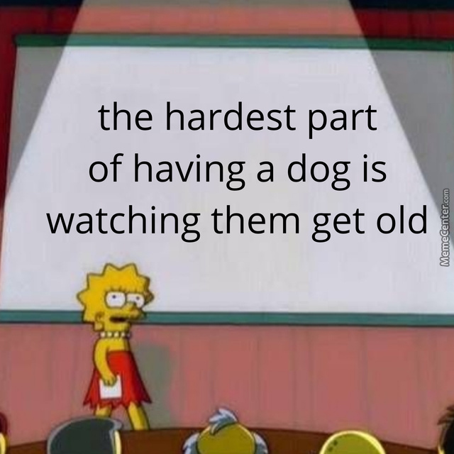 Applies To All Pets