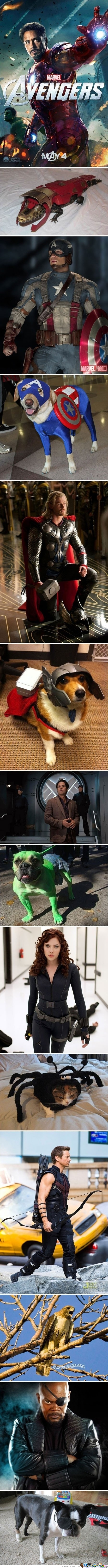 Avengers And Their Pets...