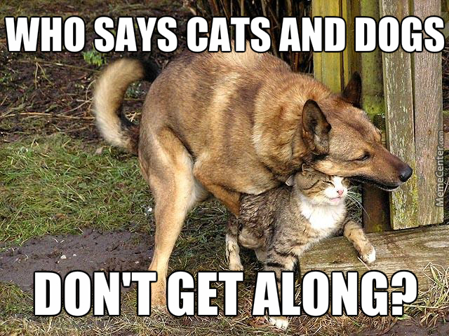 Cat Hugs Dog Meme