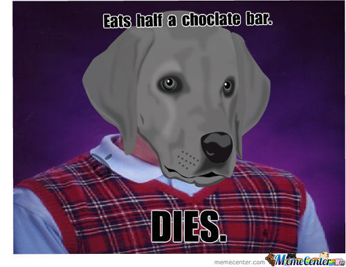 Bad Luck Dog