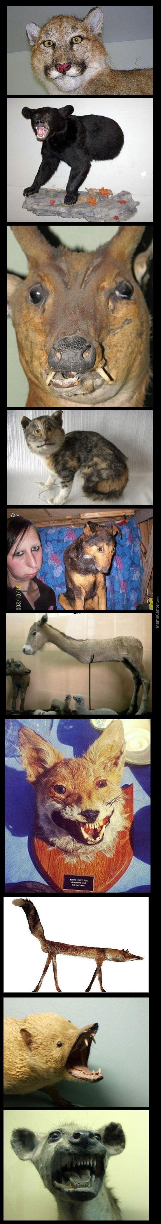 Bad Taxidermy Jobs: Part One
