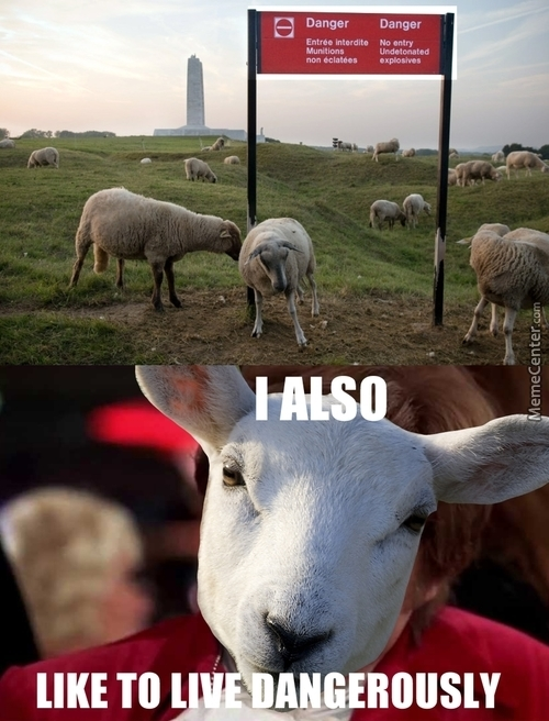 Badass As A Sheep
